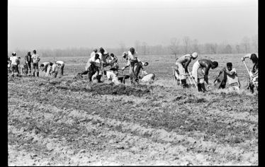 A black and white photo of about twenty men digging a ditch on a hot summer day in a field. A new exhibition at Tufts University Art Gallery sheds light on the plight of those imprisoned and their families